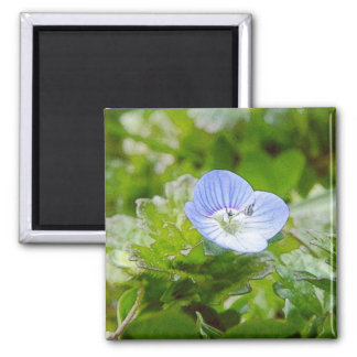 Blue Creeping Speedwell Blooms Magnet
