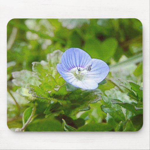 Blue Creeping Speedwell Blooms Mousepads