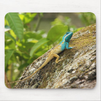Blue-Crested Lizard Calotes Mystaceus Mouse Pad
