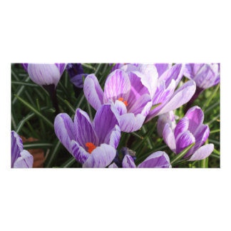 blue crocuses card