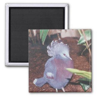 Blue crowned imperial pigeon - magnet