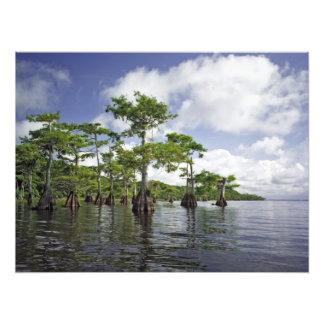 Blue Cypress Lake I. Indian River Co., Fl Photo Print