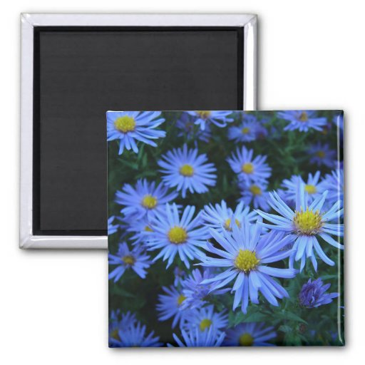 Blue Daisies 2 Inch Square Magnet