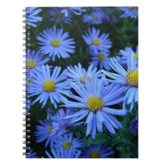 Blue Daisies Notebook
