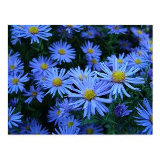 Blue Daisies Postcard