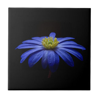 Blue Daisy Gerbera Flower on a Black background Small Square Tile