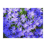 Blue Daisy-like Flowers Nature Photography Canvas Print