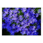 Blue Daisy-like Flowers Nature Photography Card