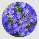 Blue Daisy-like Flowers Nature Photography Classic Round Sticker