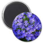 Blue Daisy-like Flowers Nature Photography Magnet