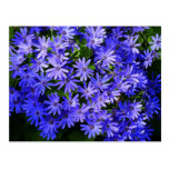 Blue Daisy-like Flowers Nature Photography Postcard