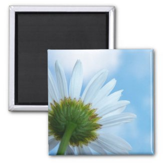 Blue Daisy Magnet magnet