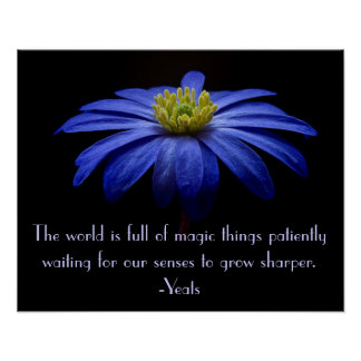 Blue Daisy with Yeats Quote Poster
