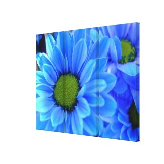 Blue Daisy Wrapped Canvas