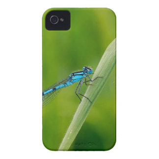 Blue damsel fly on a blade if grass Case-Mate iPhone 4 case