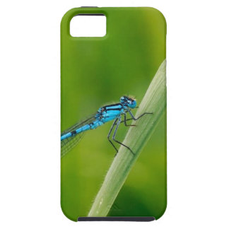 Blue damsel fly on a blade if grass iPhone SE/5/5s case