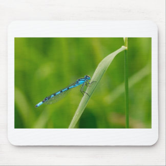 Blue damsel fly on a blade if grass mouse pad