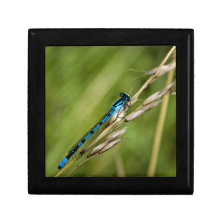 Blue Damselfly macro Gift Box