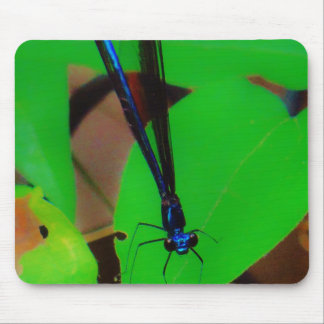 Blue Damselfly on a green leaf. dragon Mouse Pads