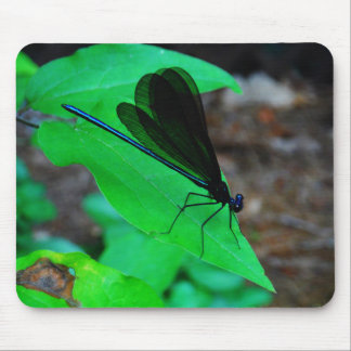 Blue Damselfly on a green leaf. Mouse Pads