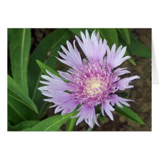 'Blue Danube' Stokes aster flower Greeting Card