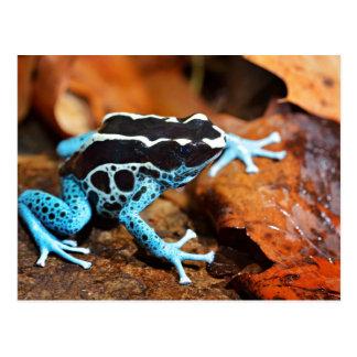 Blue Dart Frog Dendrobates Tinctorius Postcard