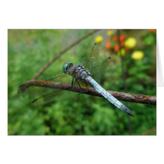 Blue Dasher Dragonfly Coordinating Items Card