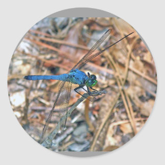 Blue Dasher Dragonfly Coordinating Items Classic Round Sticker