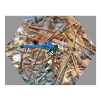 Blue Dasher Dragonfly Coordinating Items Postcard
