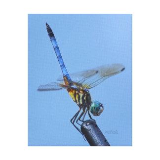 """Blue Dasher Dragonfly in """"Obelisk Posture"""". Canvas Print"""