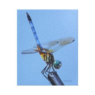 """Blue Dasher Dragonfly in """"Obelisk Posture"""" Canvas Print"""