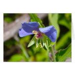 Blue Dayflower Card