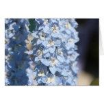 Blue Delphinium Cards