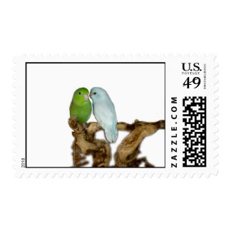 Blue delute male and green female parrotlets postage stamp