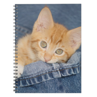 Blue Denim Orange Kitty Notebook