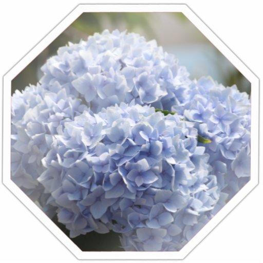 Blue Diamond Hydrangea Flowers Photo Cut Outs