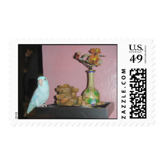 Blue Dilute Parrotlet Postage Stamp