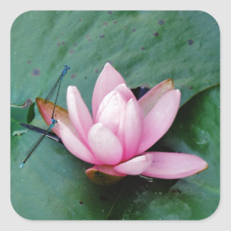 Blue Dragonflies on a pink lotus flower Square Sticker