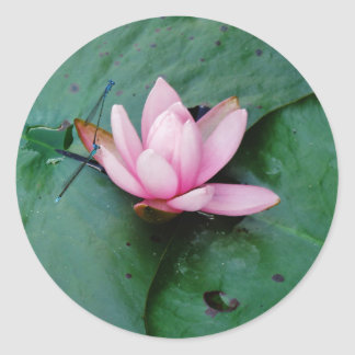 Blue Dragonflies on a pink lotus flower Classic Round Sticker