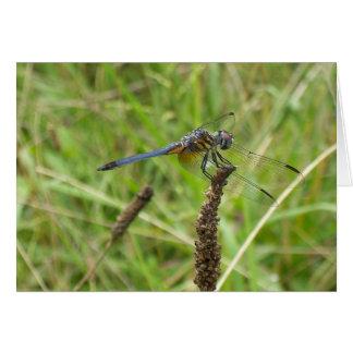 Blue Dragonfly 6578 Card