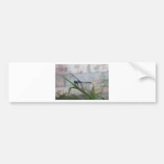 Blue Dragonfly Bumper Stickers