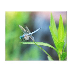 Blue Dragonfly Canvas Wall Art