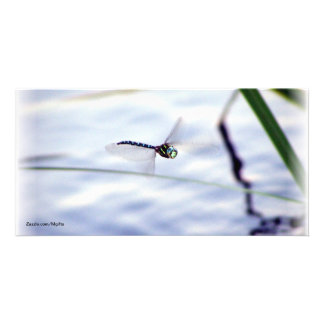Blue Dragonfly Card