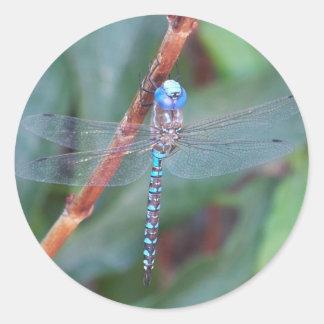 Blue Dragonfly Classic Round Sticker