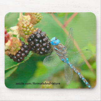 Blue Dragonfly Eating Raspberries Mousepad
