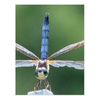 Blue Dragonfly gifts Postcard