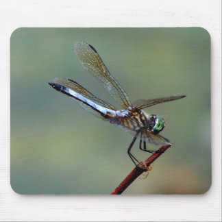 Blue  Dragonfly Mouse Pads