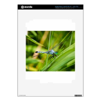 Blue Dragonfly on a Blade Decal For iPad 3