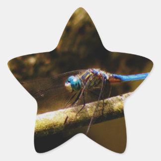 Blue Dragonfly on a brown limb. Star Sticker