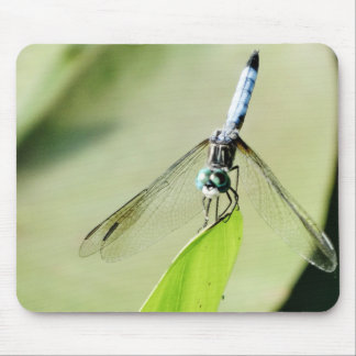 Blue Dragonfly on a green leaf Mouse Pad